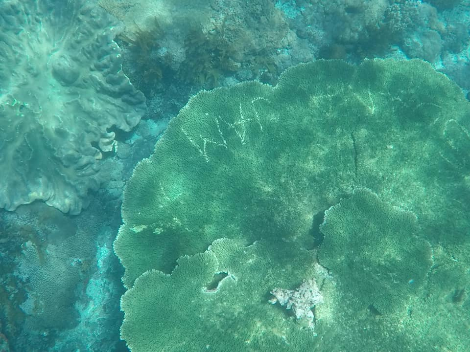 Tourists Carve Their Names In Coral In Nusa Penida