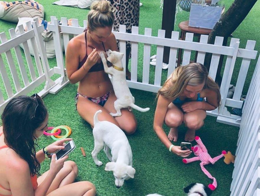 bali hotel puppies and yoga