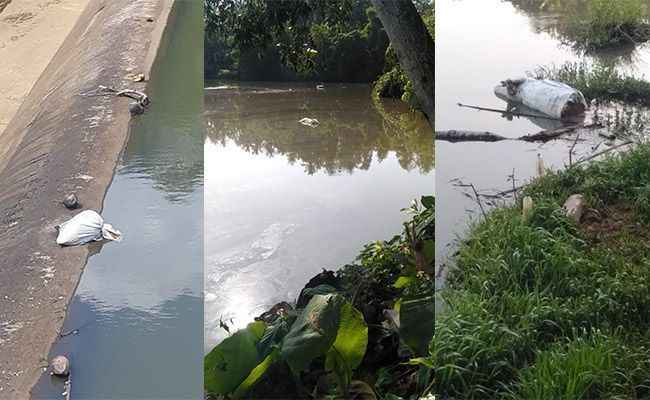 Police Hunting Bali Resident That Dumped Dead Pig In River