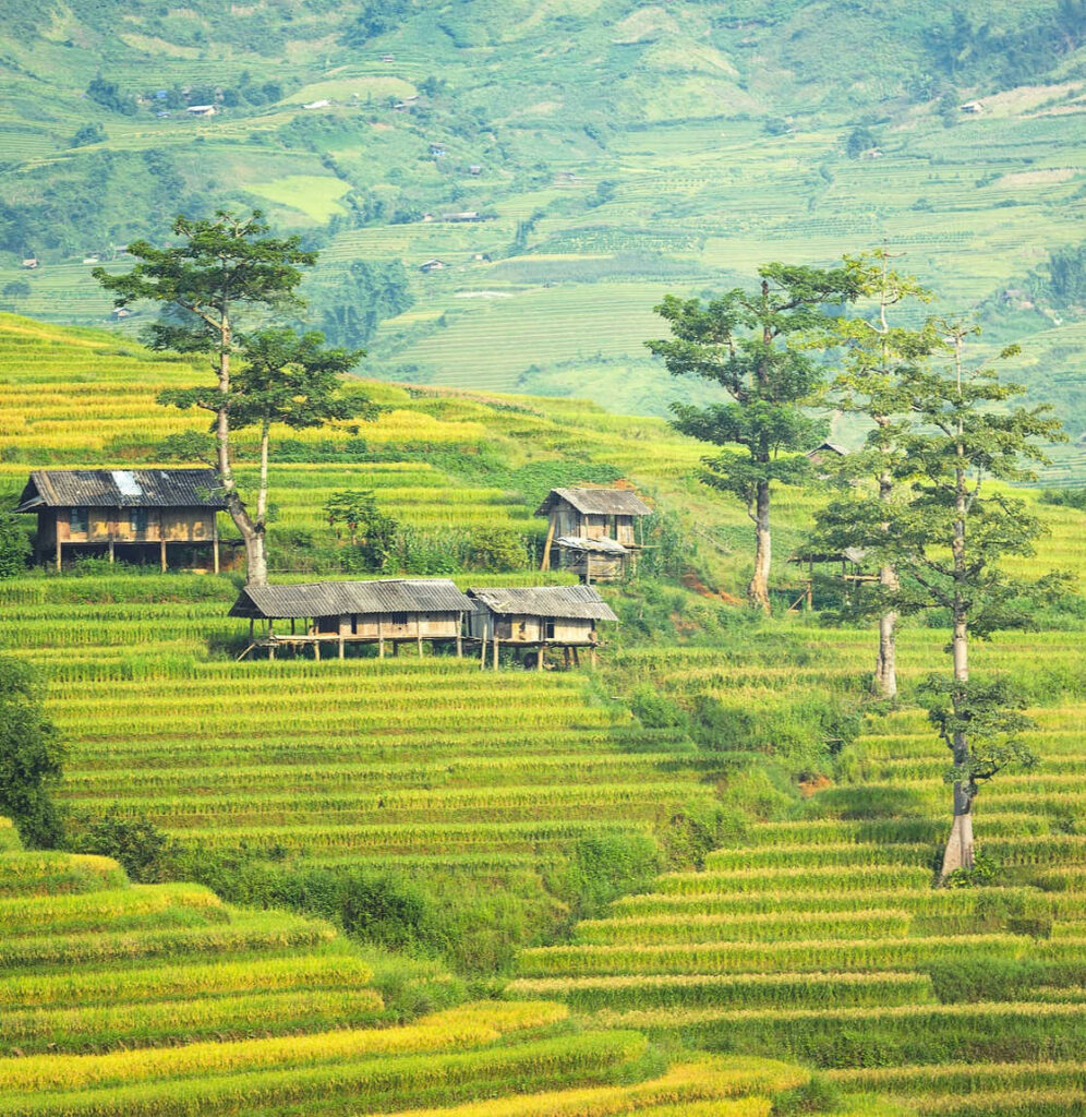 Bali Traditional house in rice field