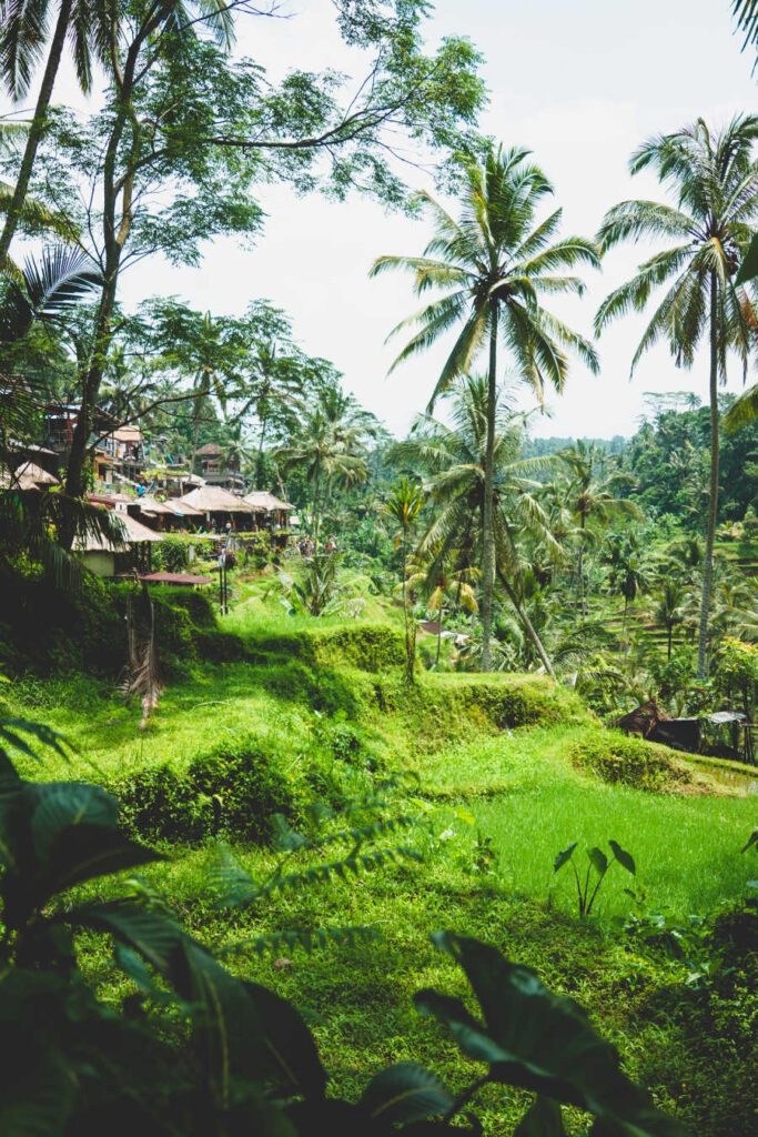 Bali villas in ubud