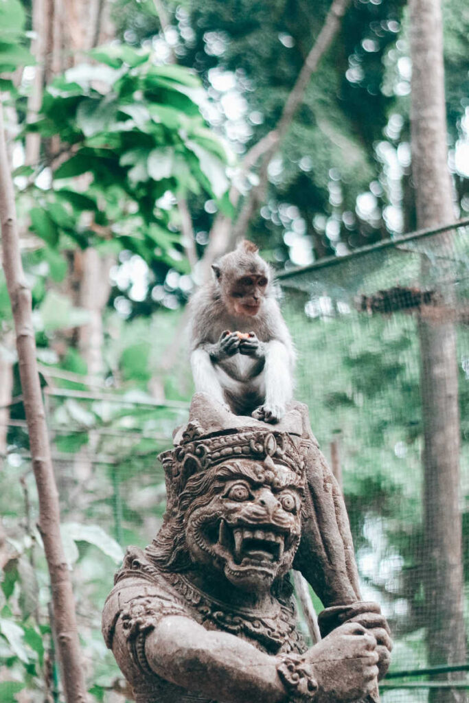 Monkey at ubud forest