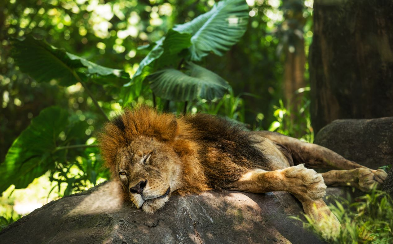 Bali Zoo May Be Forced To Breed Animals To Feed Carnivores