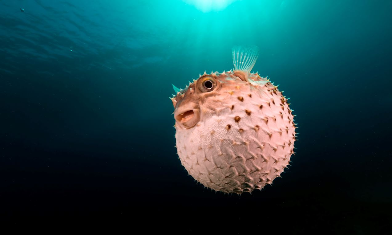 Child Loses Life In Bali After Eating Puffer Fish Crackers