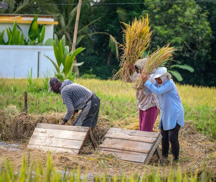 agriculture farmers Bali
