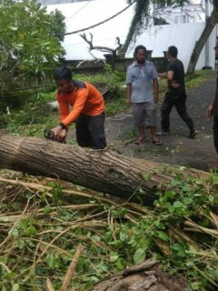 Collapsed Tree Blocks Road Access Between Denpasar And Gilimanuk