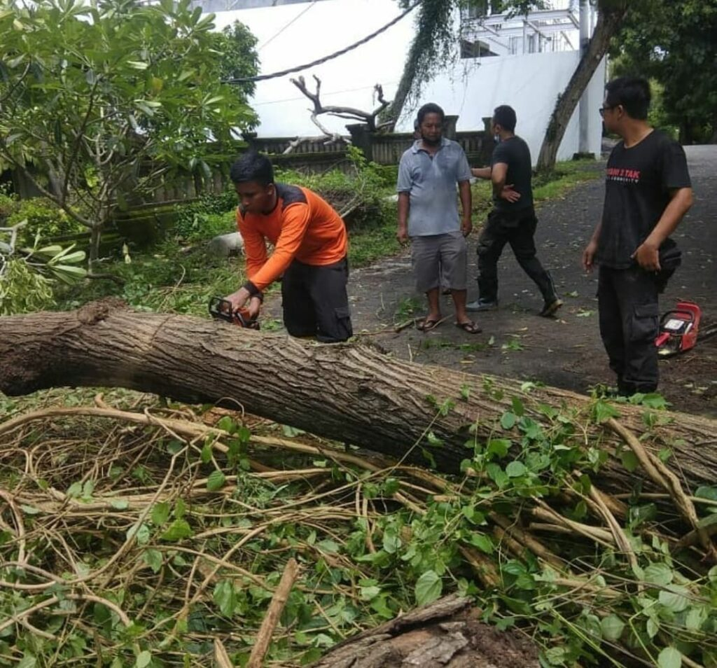 Cutting-Tree-Down