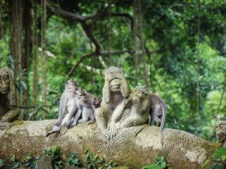 aVillagers Plant Yams To Feed Monkeys In Ubud After Lack Of Tourism