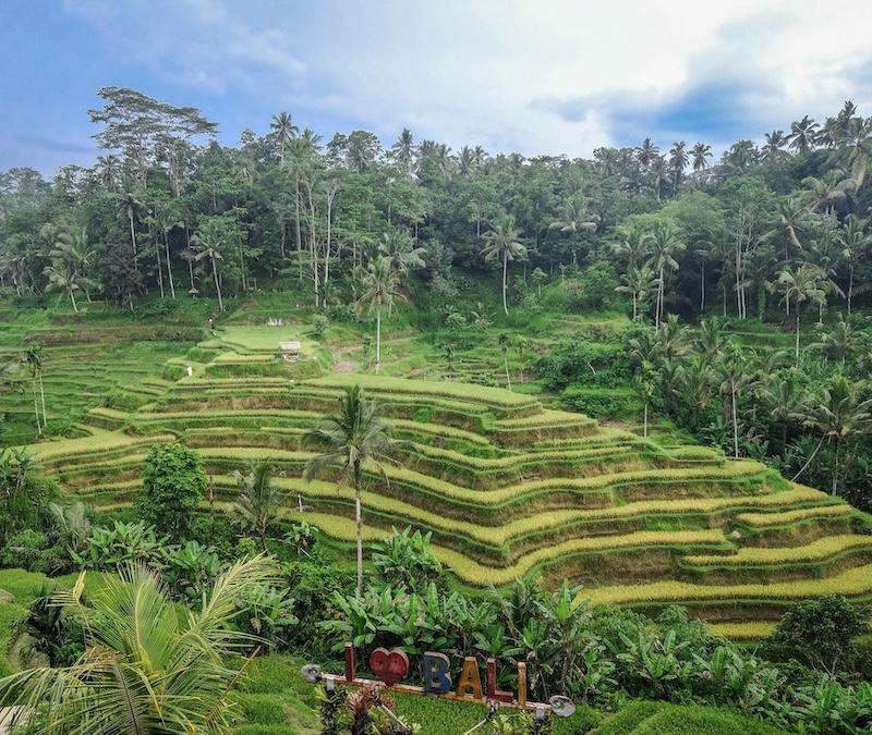 Ubud rice fields bali