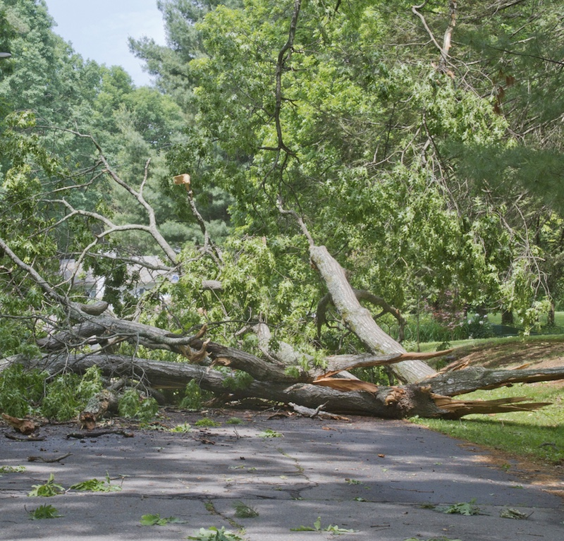 collapsed tree accident on road