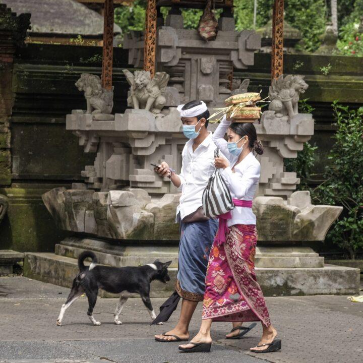 Rabies Cases From Dog Bites Surge In Karangasem, Bali